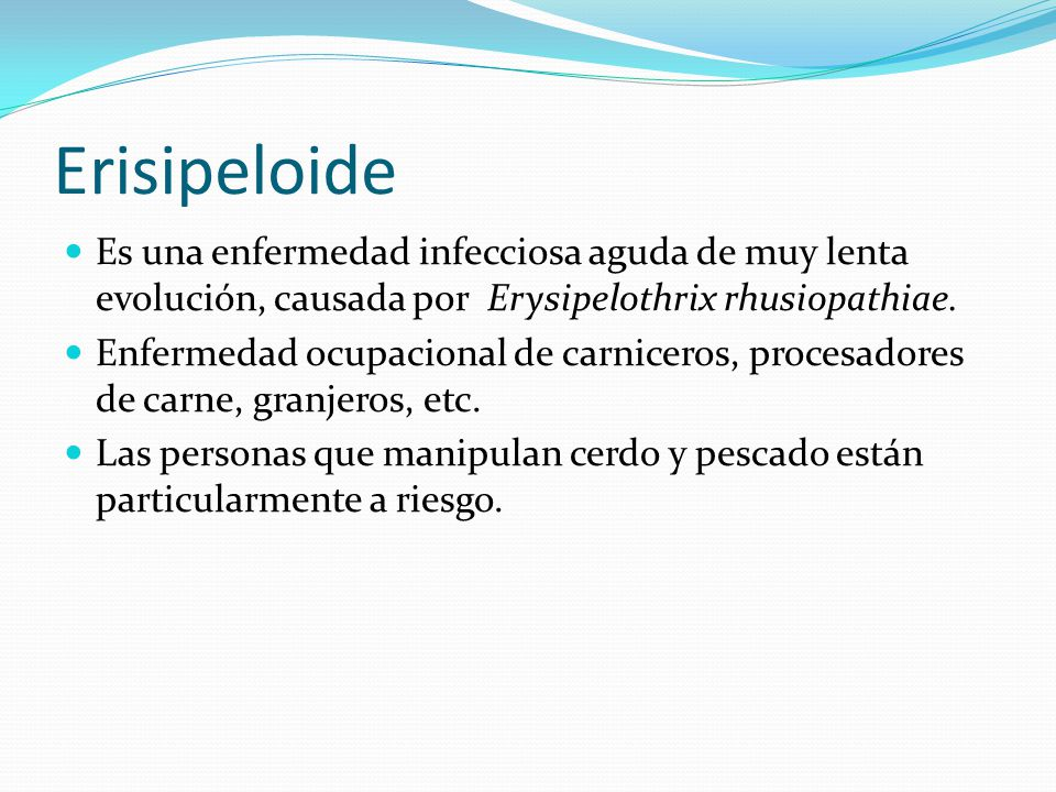 Erisipeloide Es una enfermedad infecciosa aguda de muy lenta evolución, causada por Erysipelothrix rhusiopathiae.