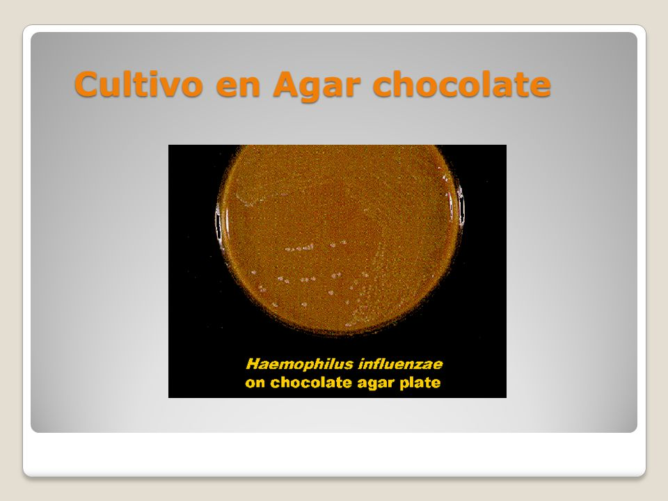 Cultivo en Agar chocolate