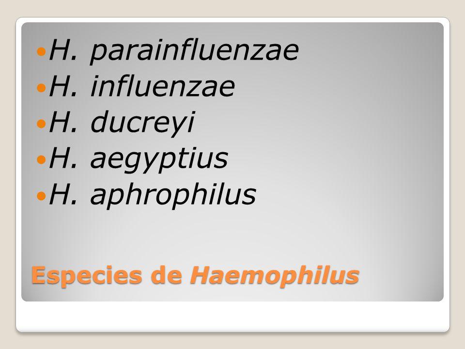 Especies de Haemophilus
