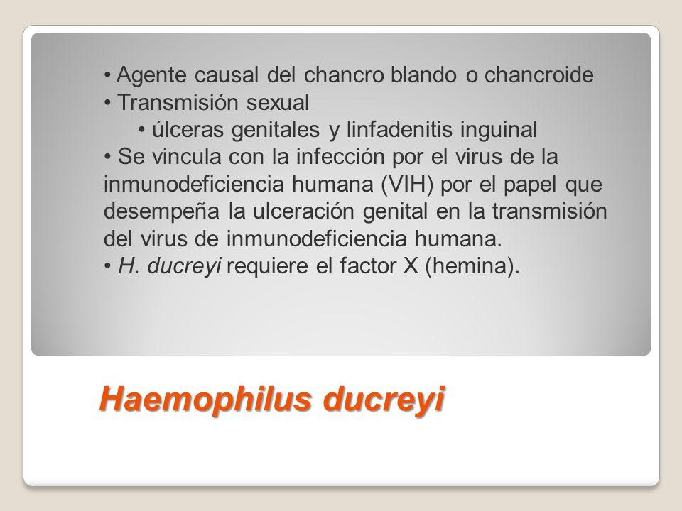 Haemophilus ducreyi Agente causal del chancro blando o chancroide