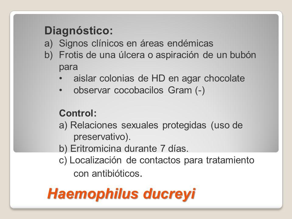Haemophilus ducreyi Diagnóstico: Signos clínicos en áreas endémicas