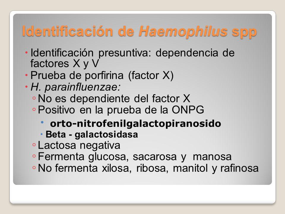 Identificación de Haemophilus spp