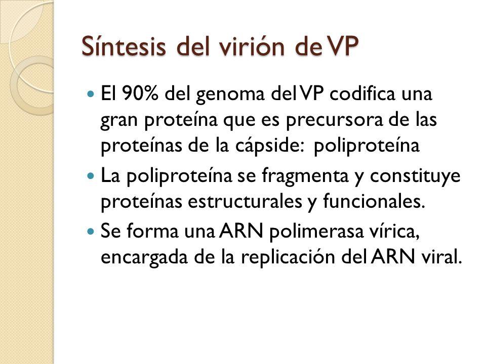 Síntesis del virión de VP