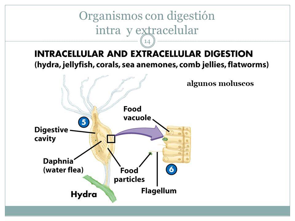 Organismos con digestión intra y extracelular