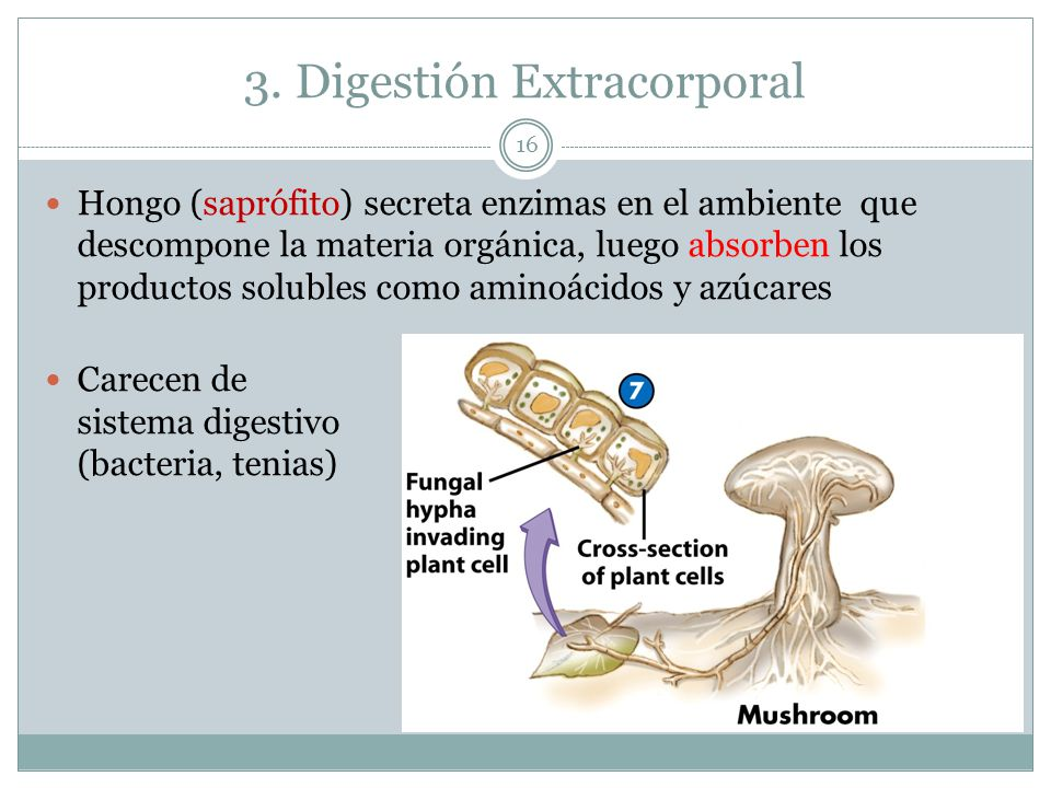 3. Digestión Extracorporal