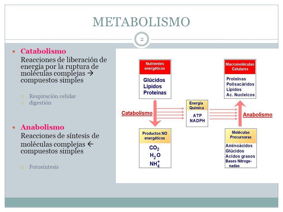METABOLISMO Catabolismo