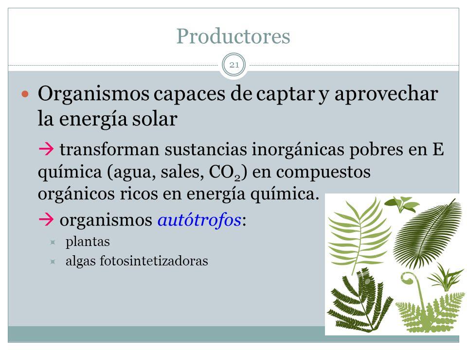 Productores Organismos capaces de captar y aprovechar la energía solar