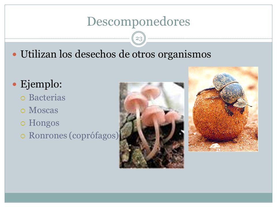 Descomponedores Utilizan los desechos de otros organismos Ejemplo: