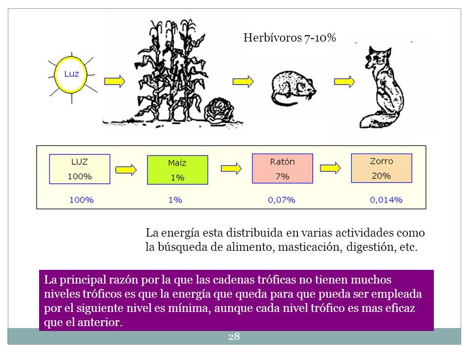 Herbívoros 7-10% La energía esta distribuida en varias actividades como la búsqueda de alimento, masticación, digestión, etc.