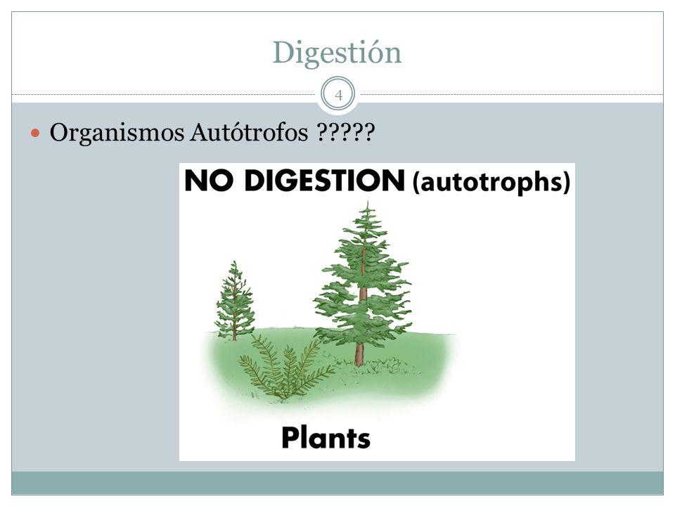 Digestión Organismos Autótrofos