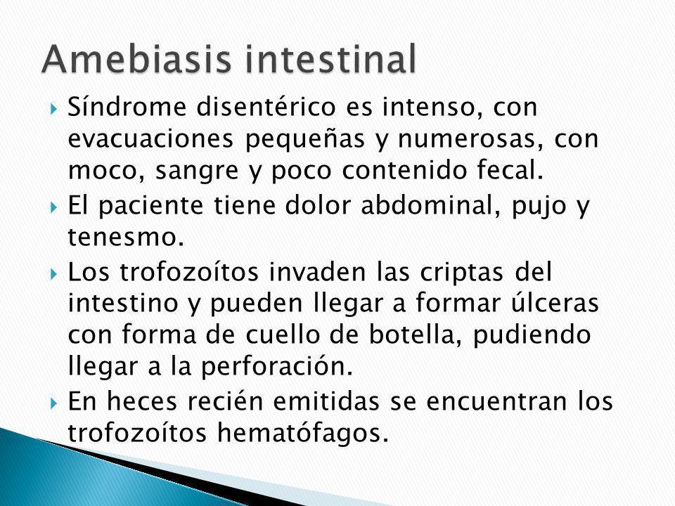 Amebiasis intestinal Síndrome disentérico es intenso, con evacuaciones pequeñas y numerosas, con moco, sangre y poco contenido fecal.