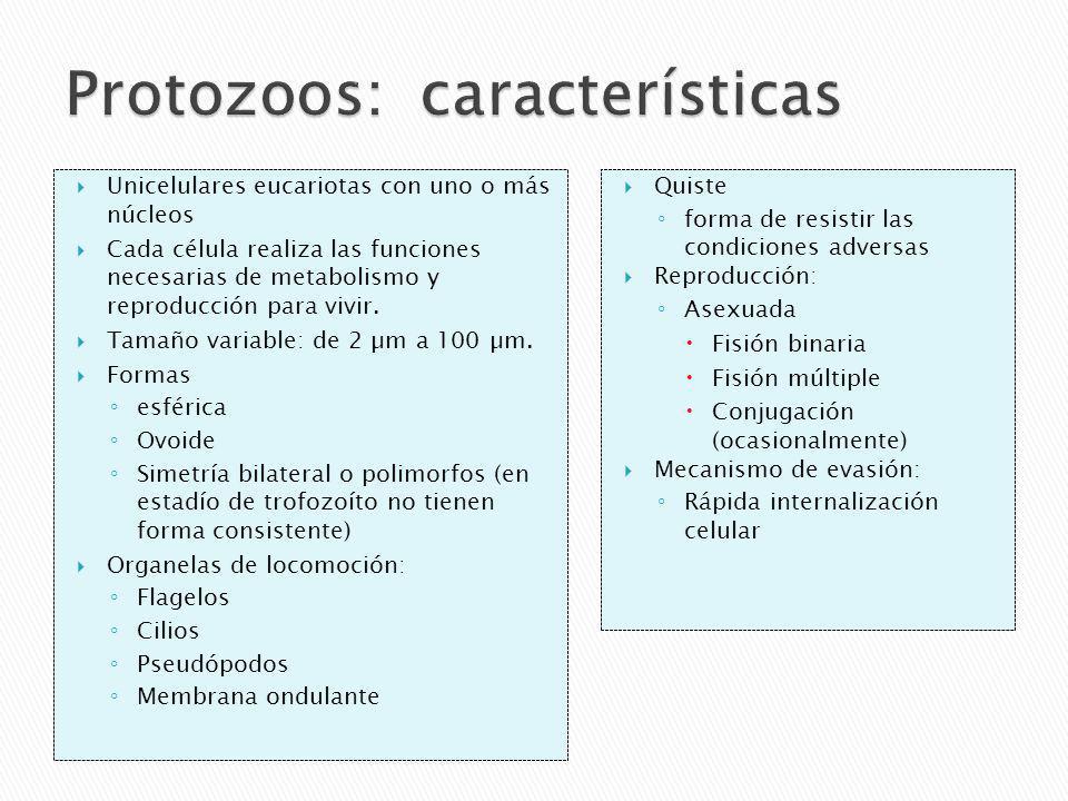 Protozoos: características
