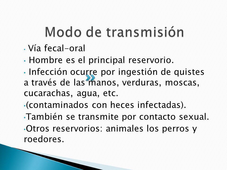 Modo de transmisión Hombre es el principal reservorio.