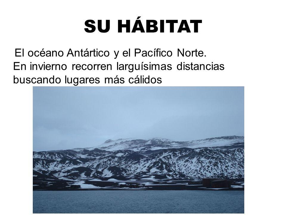 SU HÁBITAT El océano Antártico y el Pacífico Norte.