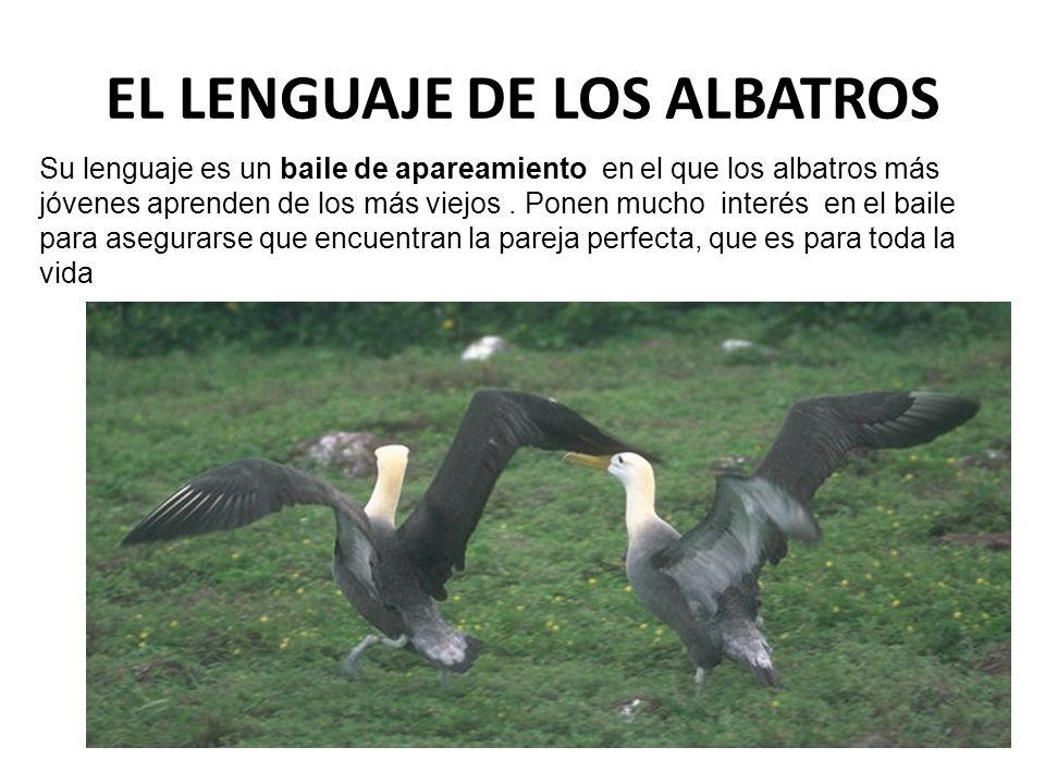 EL LENGUAJE DE LOS ALBATROS