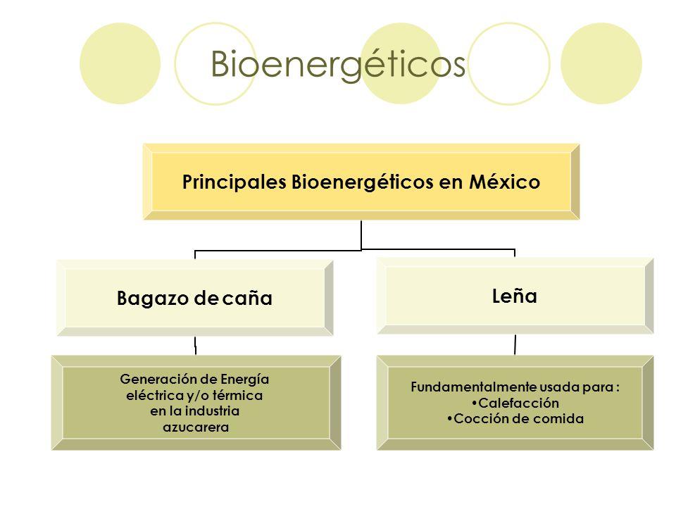Bioenergéticos
