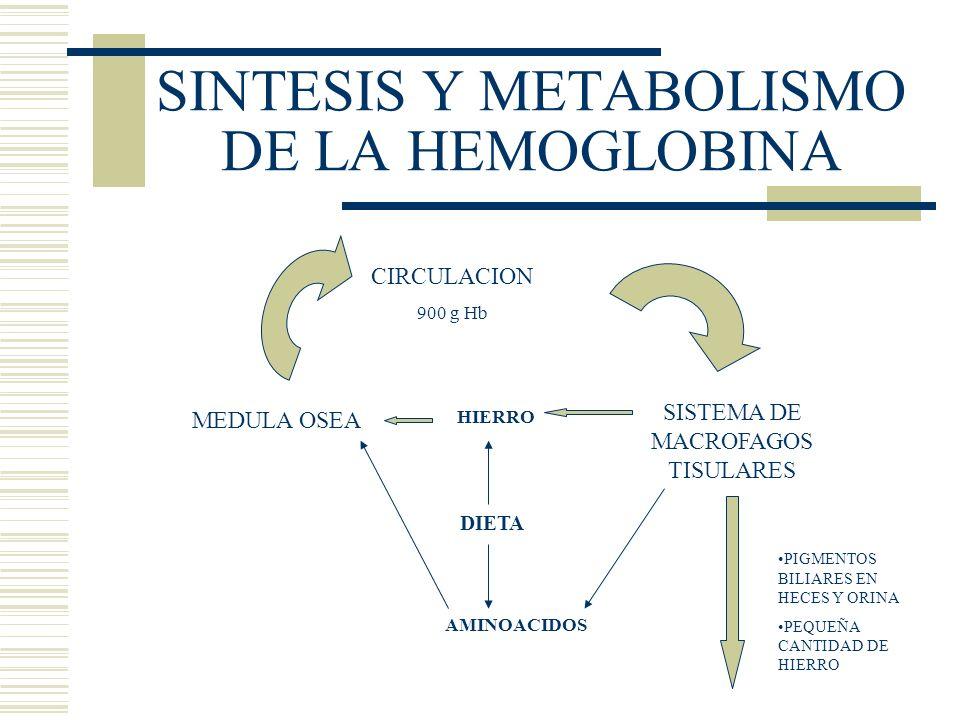 SINTESIS Y METABOLISMO DE LA HEMOGLOBINA