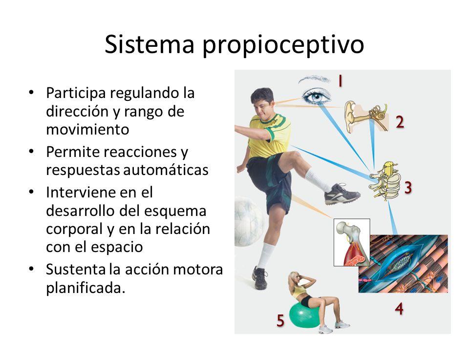 Sistema propioceptivo
