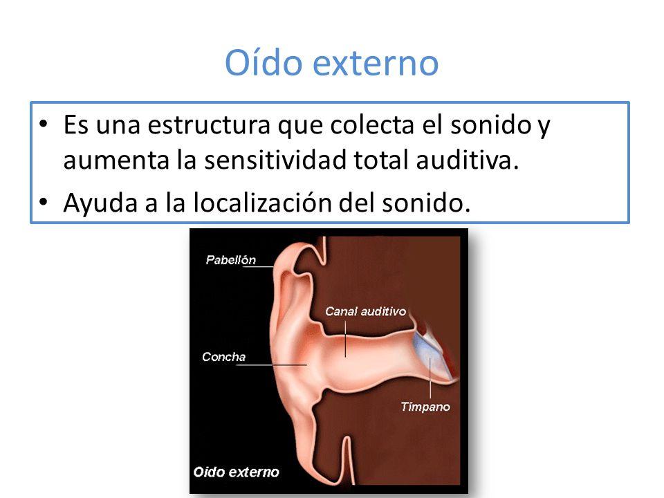 Oído externo Es una estructura que colecta el sonido y aumenta la sensitividad total auditiva.