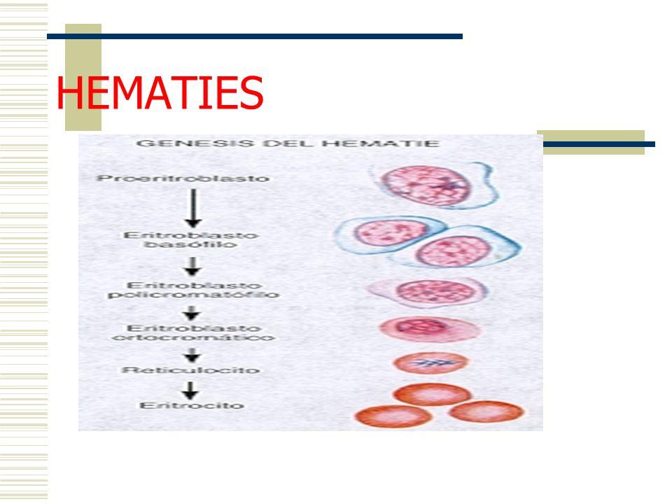 HEMATIES Génesis de los hematies