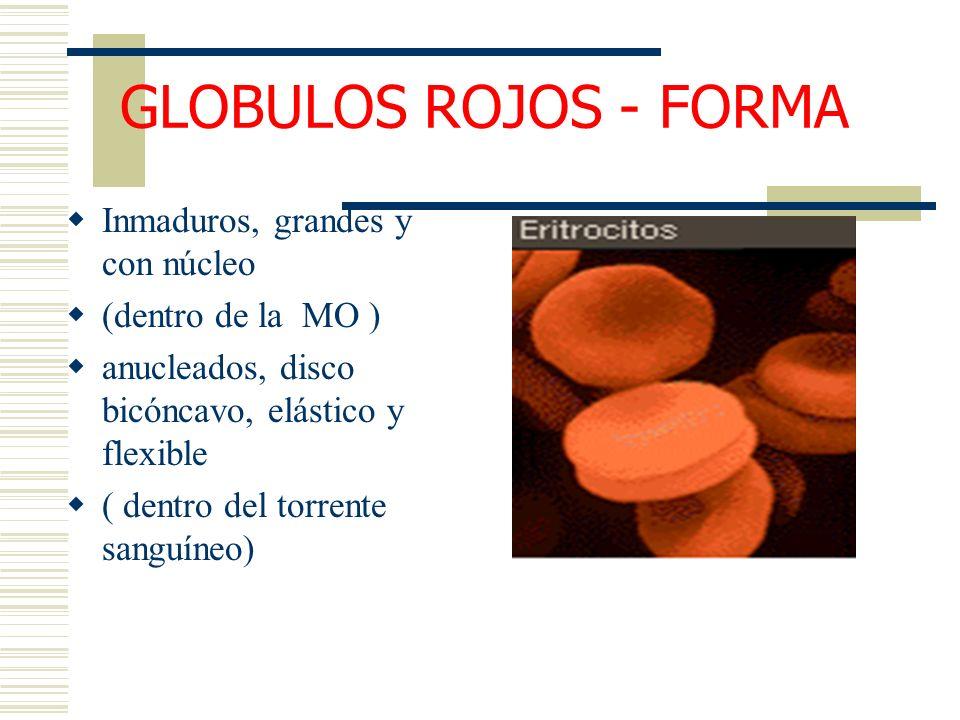 GLOBULOS ROJOS - FORMA Inmaduros, grandes y con núcleo