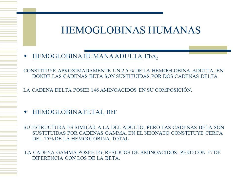 HEMOGLOBINAS HUMANAS HEMOGLOBINA HUMANA ADULTA: HbA2