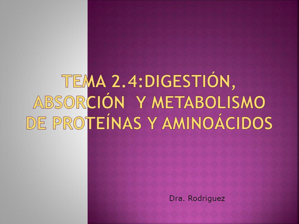 Tema 2.4:Digestión, absorción y metabolismo de proteínas y aminoácidos
