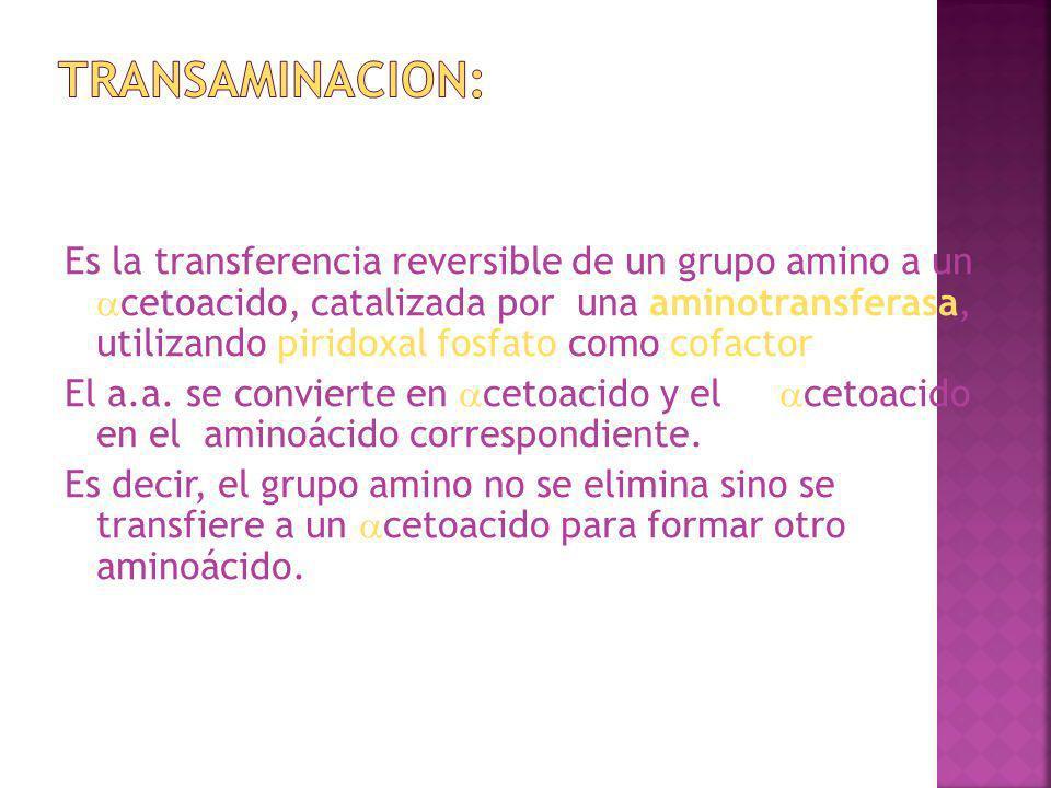 transaminacion: