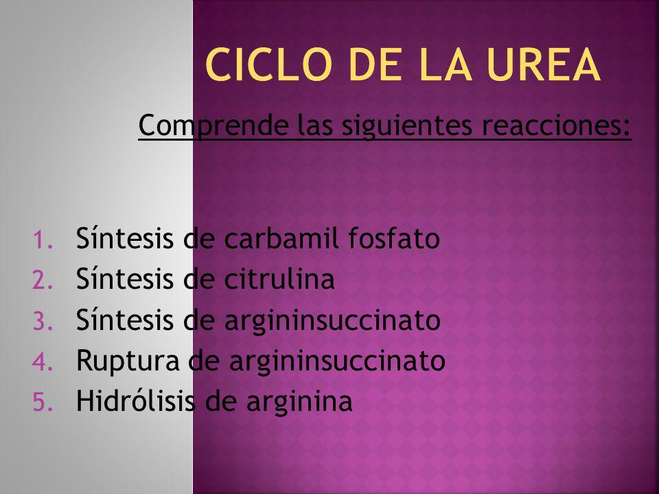 CICLO DE LA UREA Comprende las siguientes reacciones: