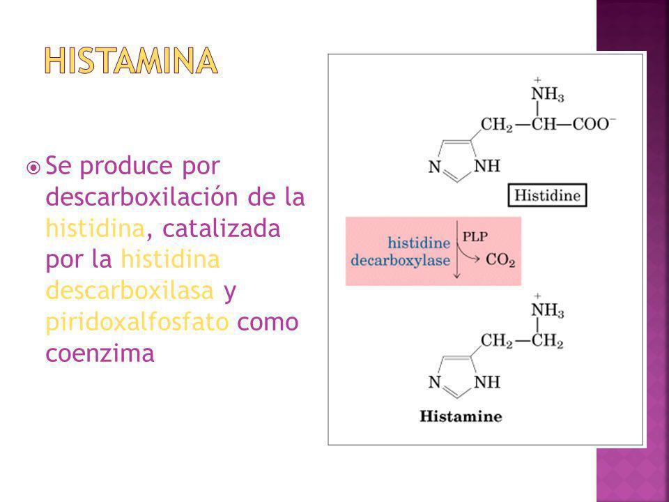 Histamina Se produce por descarboxilación de la histidina, catalizada por la histidina descarboxilasa y piridoxalfosfato como coenzima.