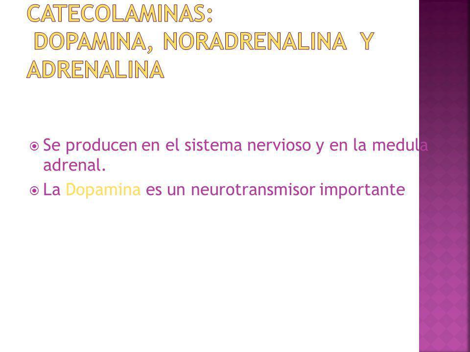 CATECOLAMINAS: Dopamina, Noradrenalina y Adrenalina