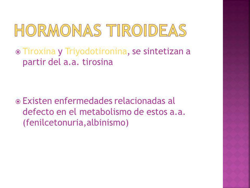 Hormonas Tiroideas Tiroxina y Triyodotironina, se sintetizan a partir del a.a. tirosina.