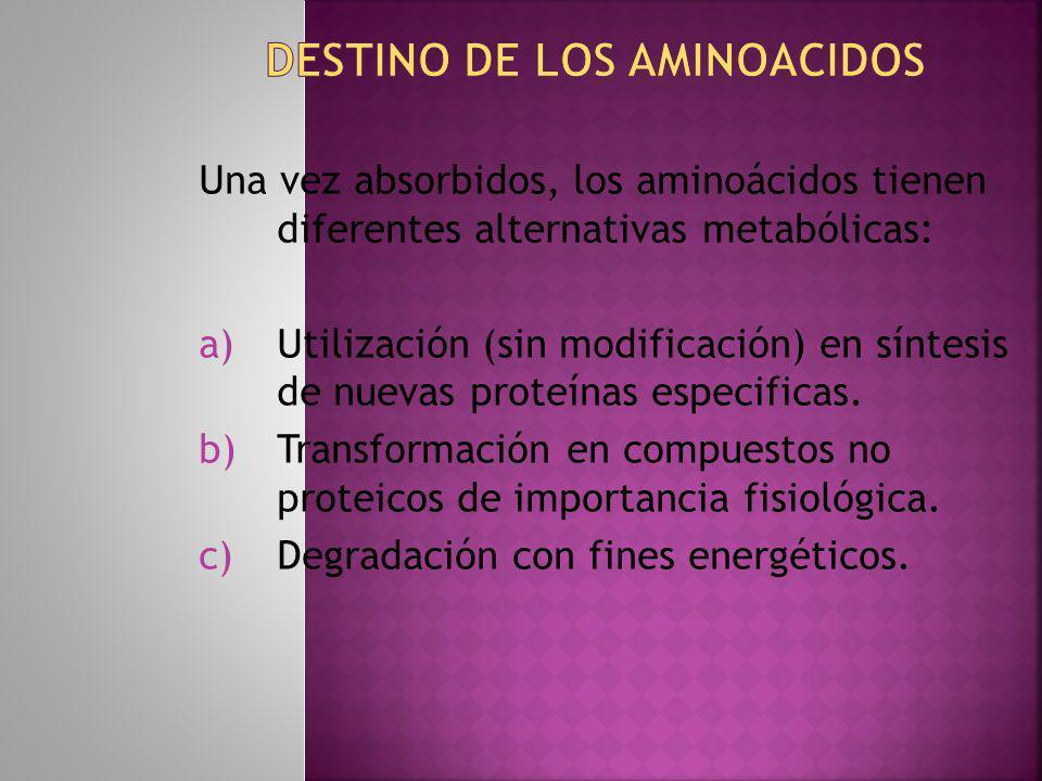 DESTINO DE LOS AMINOACIDOS