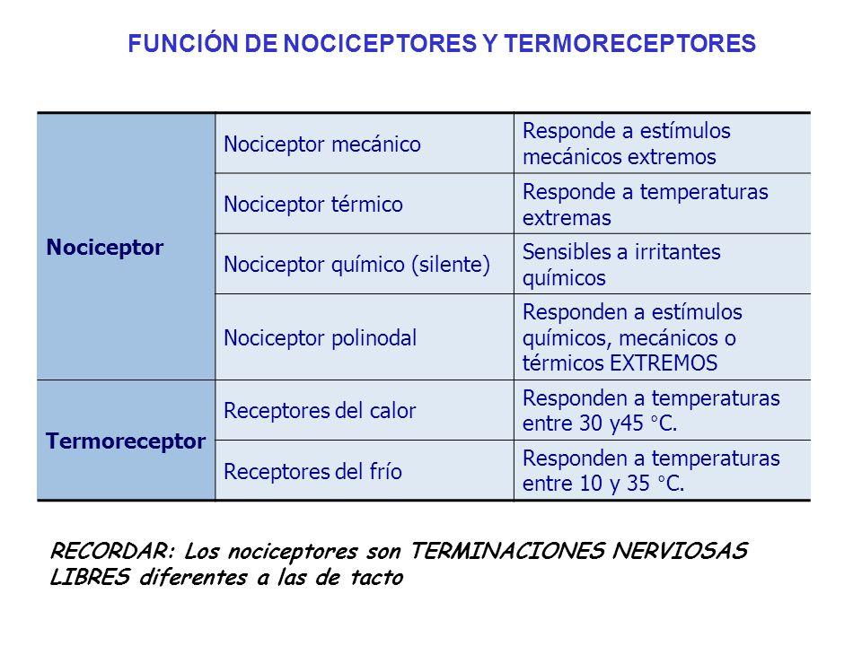 FUNCIÓN DE NOCICEPTORES Y TERMORECEPTORES