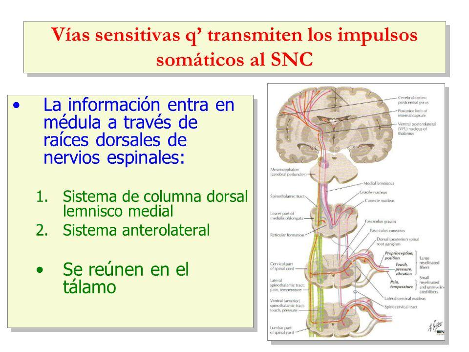 Vías sensitivas q' transmiten los impulsos somáticos al SNC