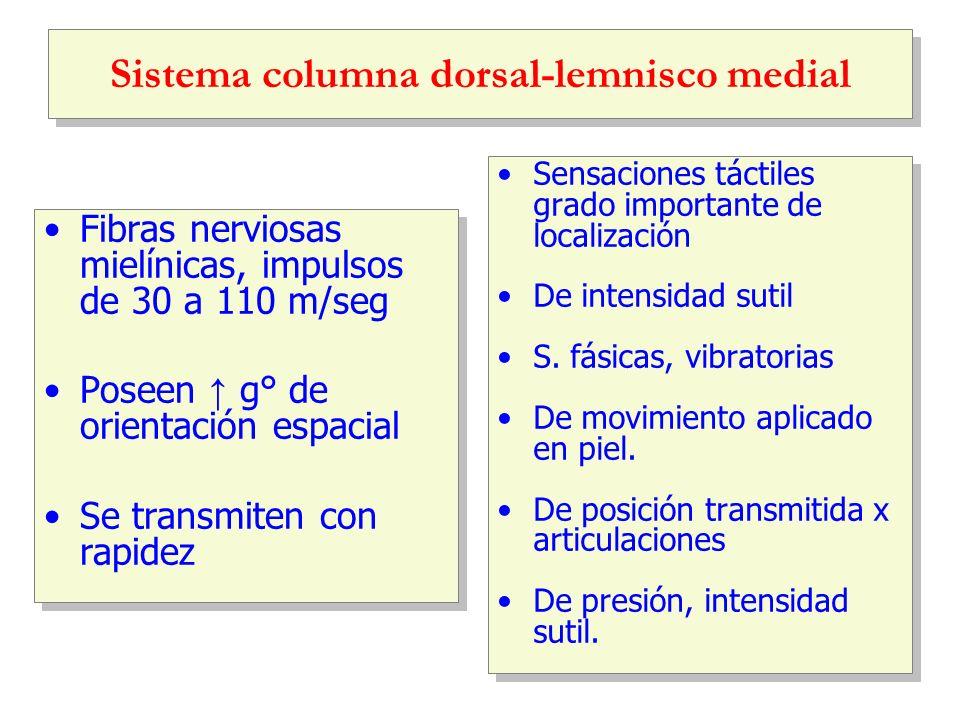 Sistema columna dorsal-lemnisco medial