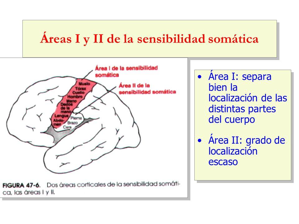Áreas I y II de la sensibilidad somática