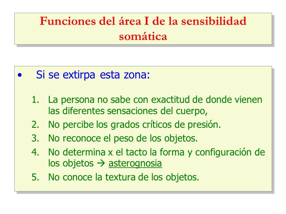 Funciones del área I de la sensibilidad somática