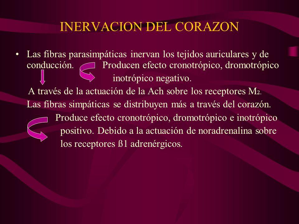 INERVACION DEL CORAZON
