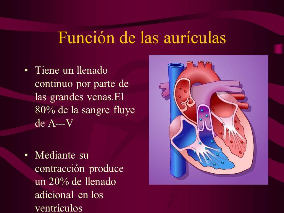 Función de las aurículas