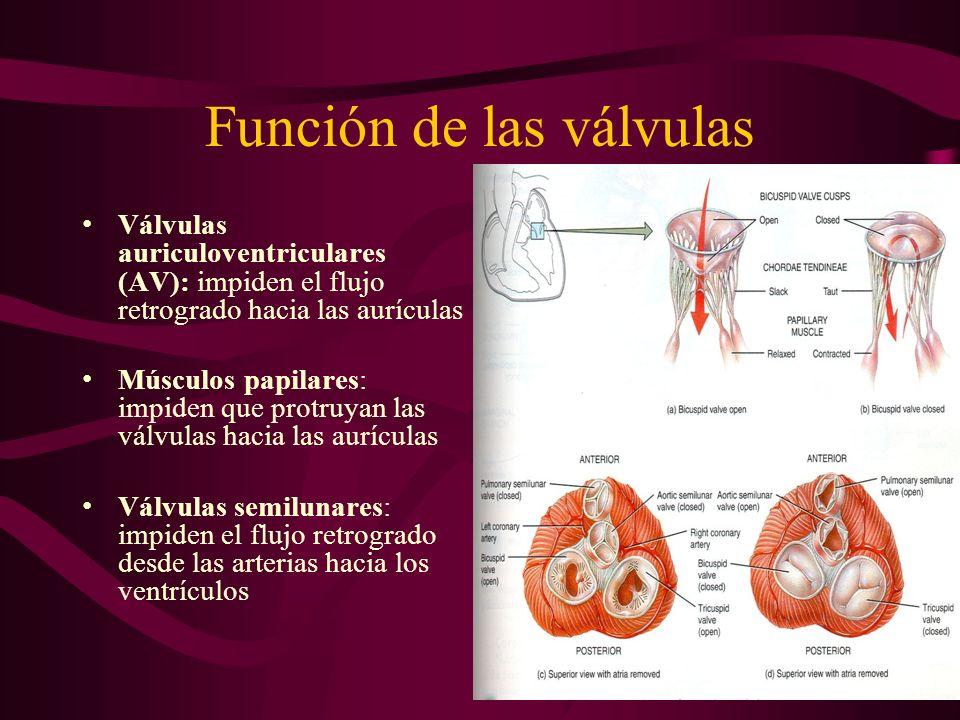 Función de las válvulas