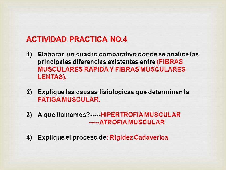 ACTIVIDAD PRACTICA NO.4