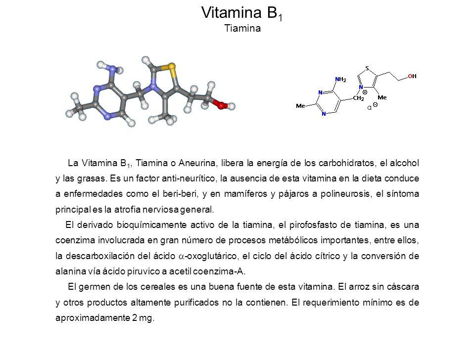 Vitamina B1 Tiamina.