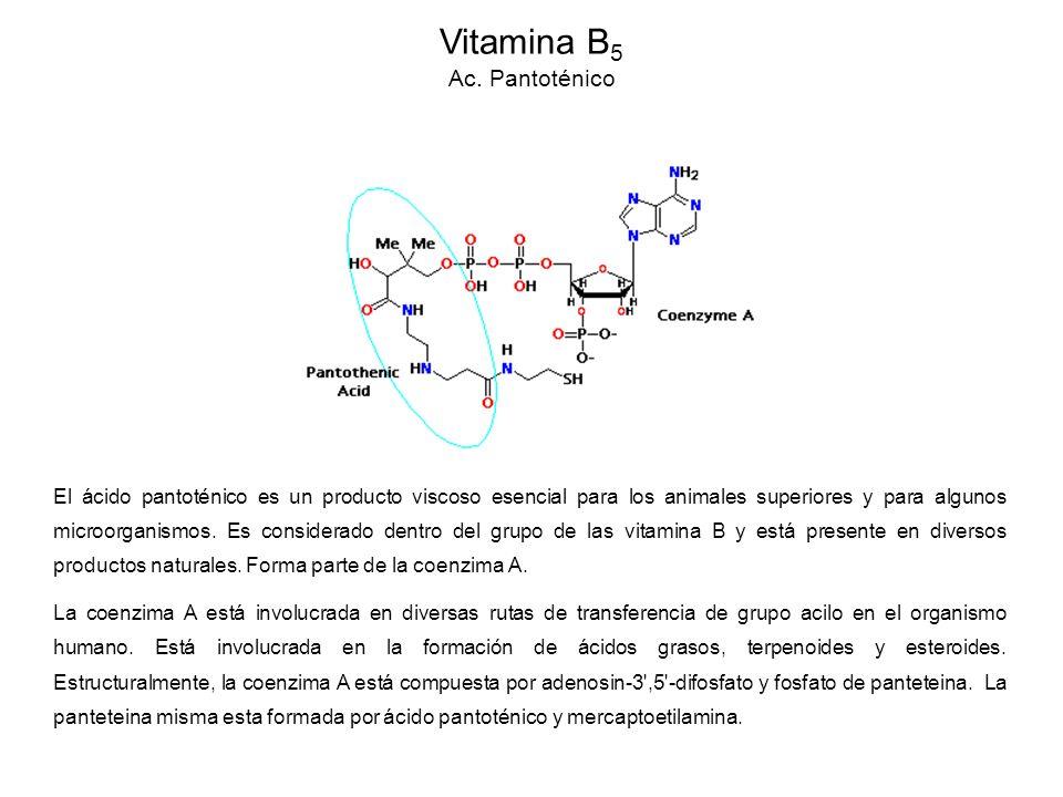Vitamina B5 Ac. Pantoténico