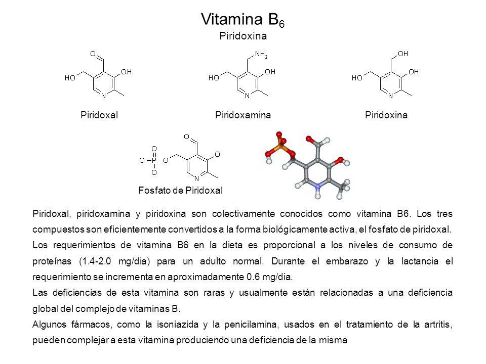 Vitamina B6 Piridoxina Piridoxal Piridoxamina Piridoxina