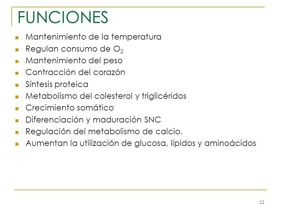 FUNCIONES Mantenimiento de la temperatura Regulan consumo de O2