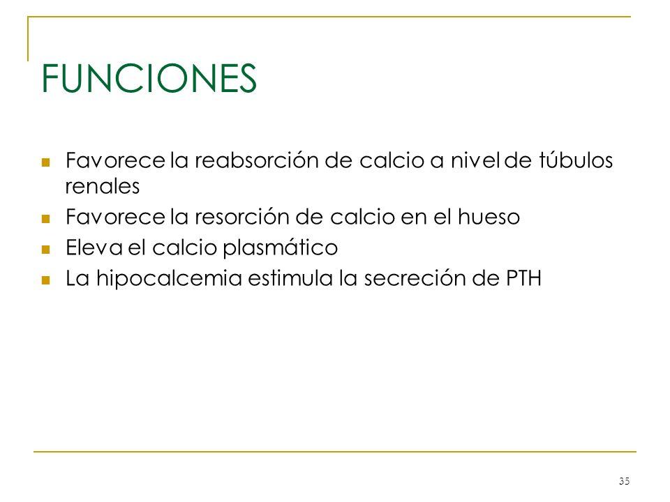 FUNCIONES Favorece la reabsorción de calcio a nivel de túbulos renales