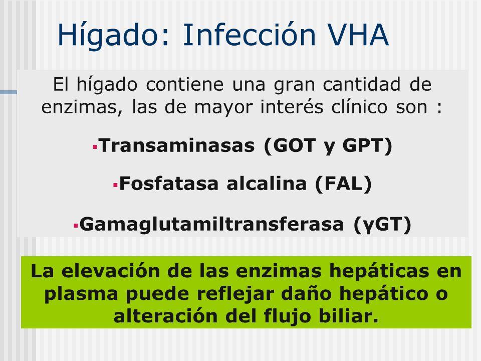 Hígado: Infección VHA El hígado contiene una gran cantidad de enzimas, las de mayor interés clínico son :