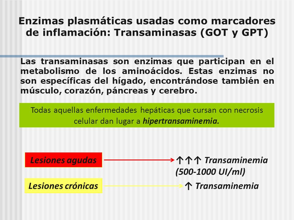 ↑↑↑ Transaminemia (500-1000 UI/ml)