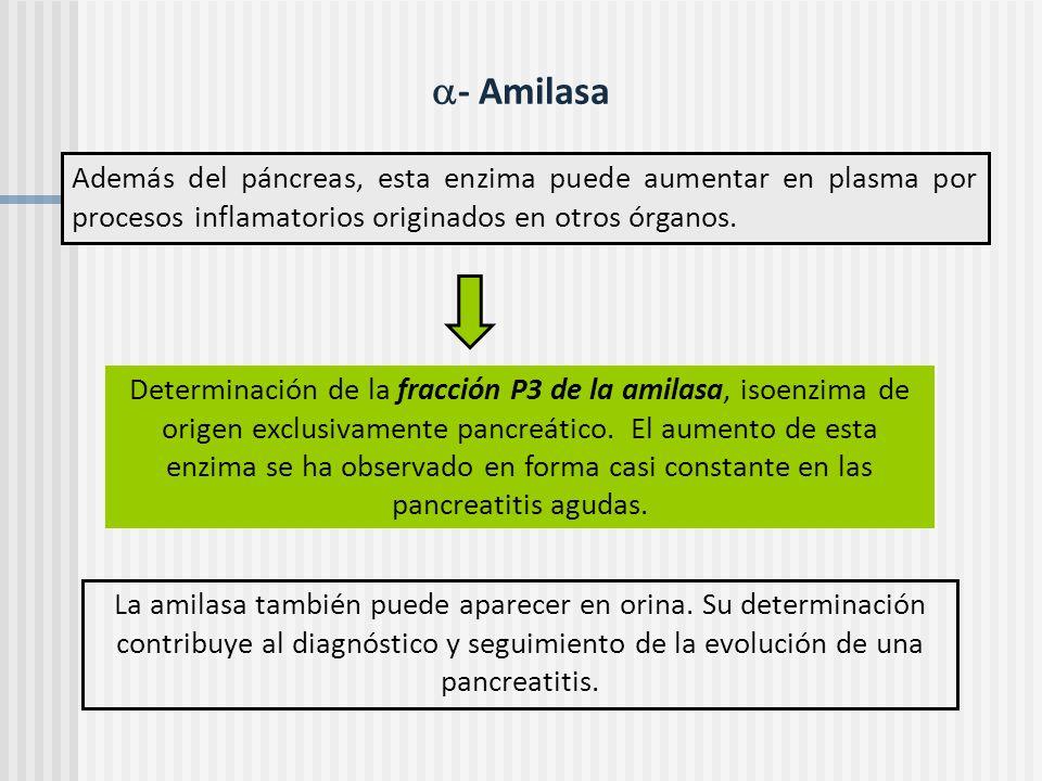 - Amilasa Además del páncreas, esta enzima puede aumentar en plasma por procesos inflamatorios originados en otros órganos.